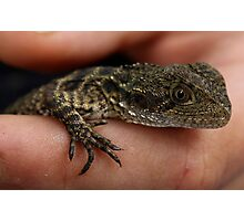 Baby dragon Photographic Print