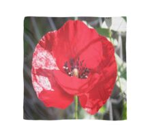 Single Red Poppy Flower  Scarf