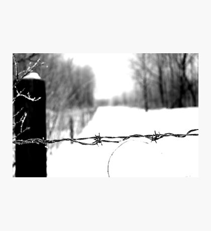 Frosted Barbed Wire  Photographic Print