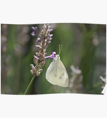 Butterfly costume Poster