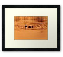 Ducks at sunset Framed Print