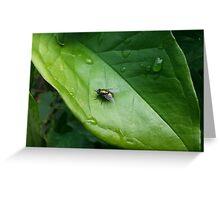 Greenbottle on a green leaf Greeting Card