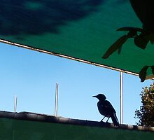Shade Cloth Magpie - 31 03 13 by Robert Phillips