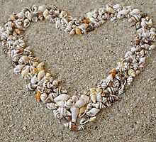 Heart arranged from Seashells by kirilart