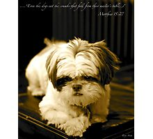 Matthew 15:27 Photographic Print