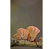 Rainforest treasure Photographic Print