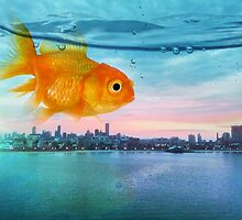 goldfish sunrise by Vin  Zzep