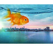 goldfish sunrise Photographic Print