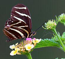 A neighborly butterfly by jozi1