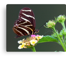 A neighborly butterfly Canvas Print