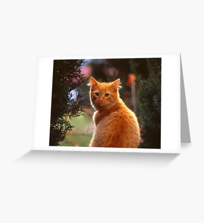 My Wife's Cat Greeting Card