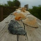 Shells on a Rail by Chad Burrall