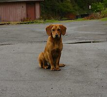 Northfork, WV Puppy by Chad Burrall