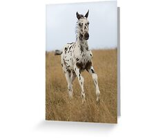 Africa's WAPS Magic (Apaloosa Colt) Greeting Card
