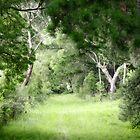 A path less taken... by kenea