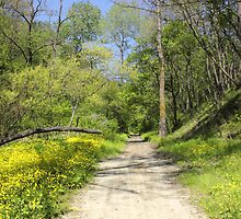 Forest Path with vibrant yellow flowers by kirilart