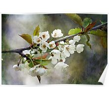 Textured Blossom Poster