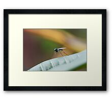 Lord of the Flies Framed Print