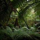 untitled rainforest by andreasphoto