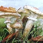 Destroying Angel Fungi by ricksilverfish