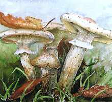 Destroying Angel Fungi by ricksilverfish