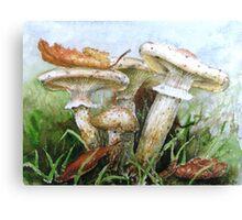Destroying Angel Fungi Canvas Print