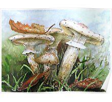 Destroying Angel Fungi Poster