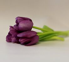 Trio in Purple by AnnDixon