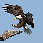 The landing  by kathy s gillentine