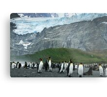 King Penguins of South Georgia Metal Print
