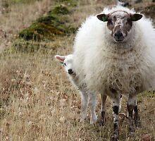 Don't be so Shy - It is Spring by Jo Nijenhuis