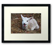 Love of Spring Framed Print