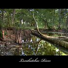 Loxahatchee River 2 by Michaela Kopecka