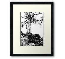 Black & White Tree at Troodos Framed Print