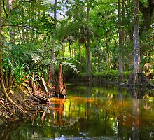 Loxahatchee River 3 by Michaela Kopecka