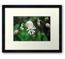 small flower with insect Framed Print