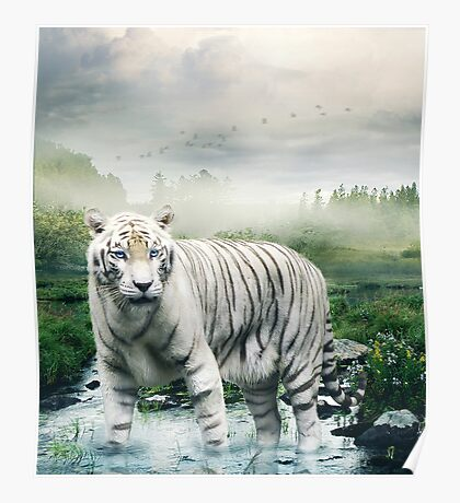 Lonely Tiger 1 Poster