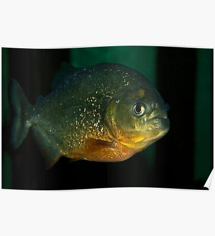Lone piranha Poster