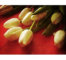 White Tulips over Red Photographic Print