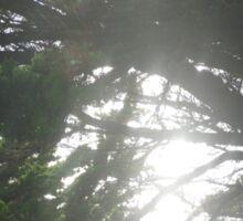 Tree Scene  Sticker