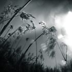 grass and winter sun by Dorit