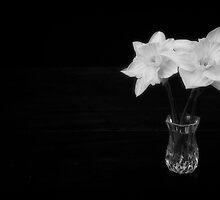Daffodil in Vase by homendn