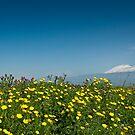 Mt. Etna in springtime by Andrea Rapisarda