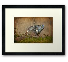 Here be dragons Framed Print