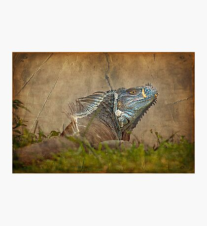 Here be dragons Photographic Print