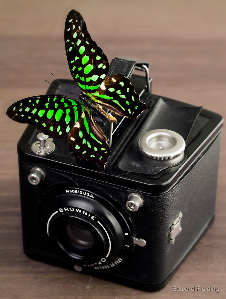 Beautiful Butterfly on a Kodak Brownie Camera by Edward Fielding