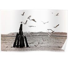 Seagulls at the sea - duotone Poster
