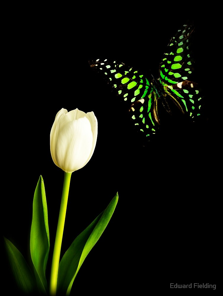 Butterfly and Tulip by Edward Fielding