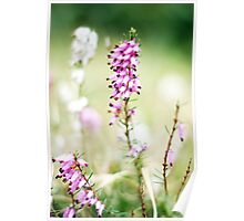I love the sound of the breeze blowing through the heather... Poster
