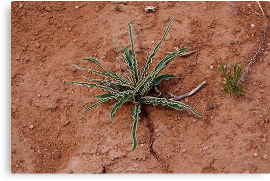 Cactus at Kodachrome State Park Utah USA by Anthony & Nancy  Leake